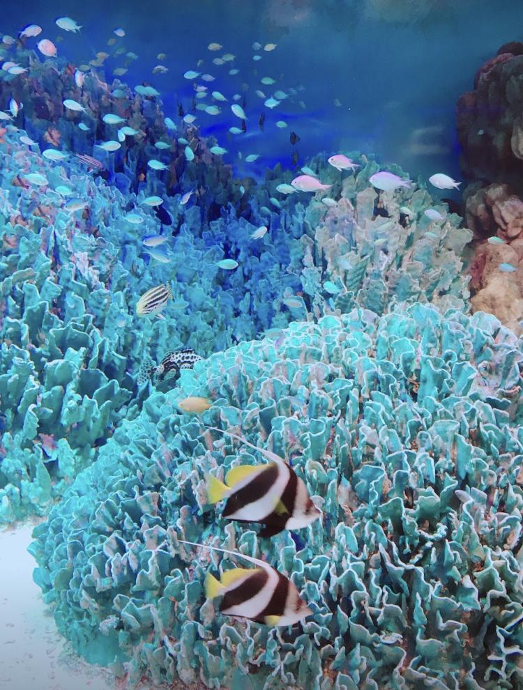 サンゴ礁、魚、海