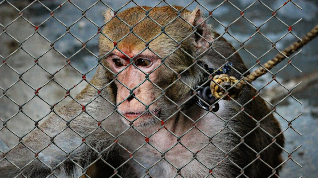 サル、動物実験、クルエルティーフリー