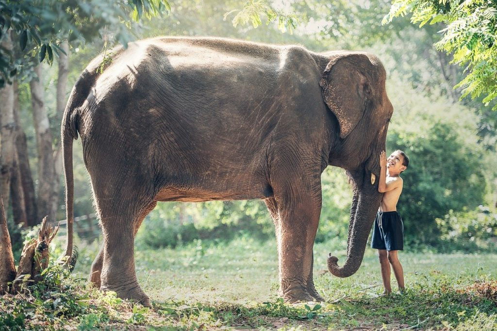 ゾウ 友達