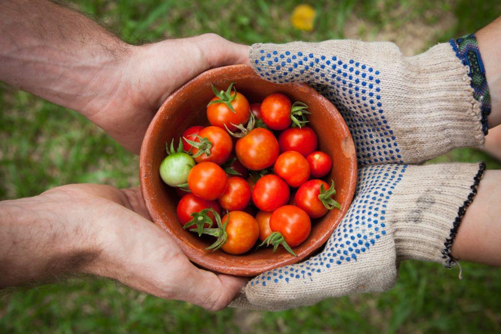 トマト、リコピン